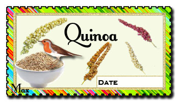 Quinoa copie